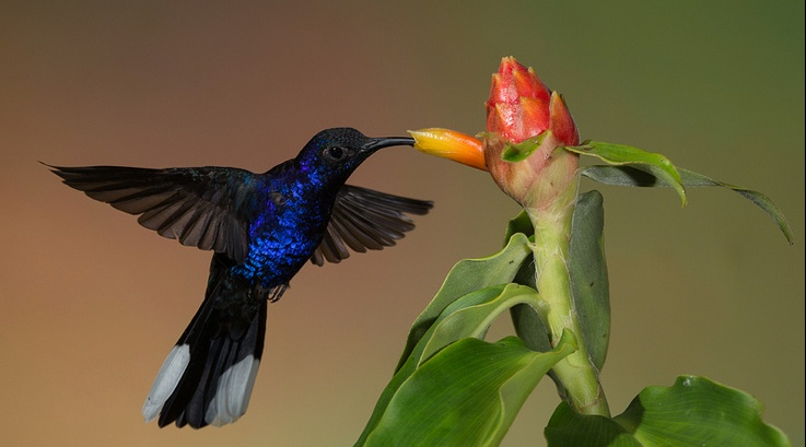 The best of the internet marketing web features Google's hummingbird update.